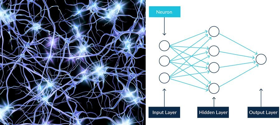neural network vs artificial neural network